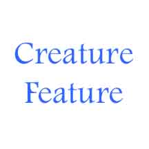National Geographic Creature Feature